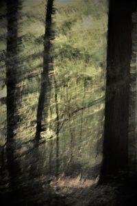 Forêt en flou artistique